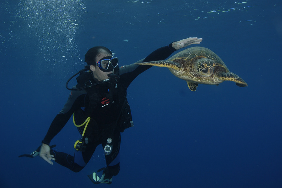 Don't be this guy. It is never cool to pet turtles, no matter what your instructor tells you. Image by  James