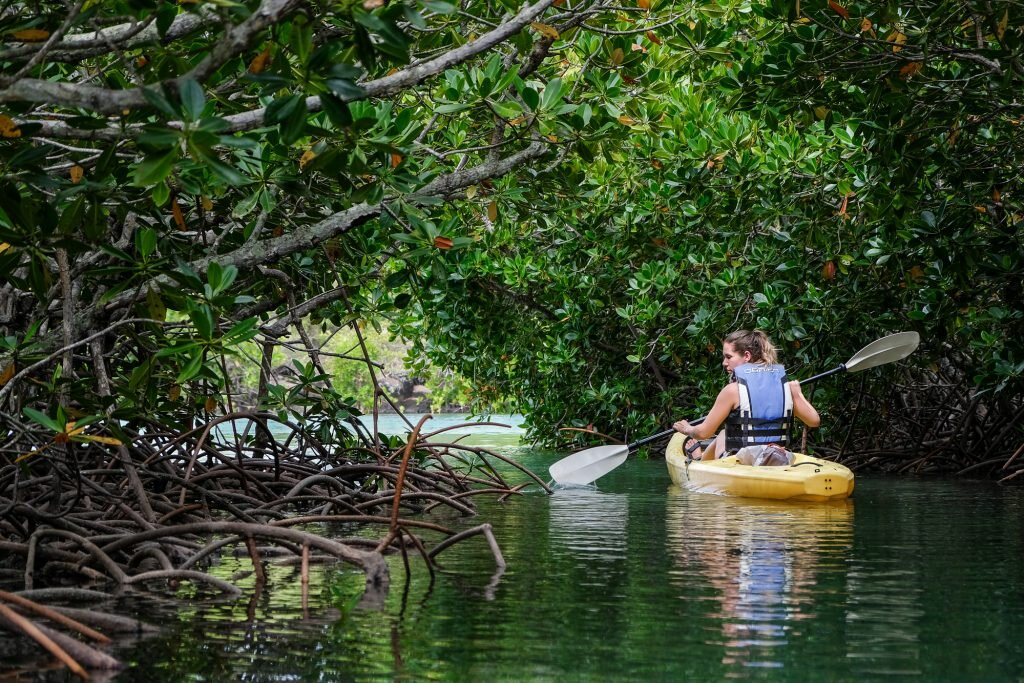 Get back to nature on an eco-conscious kayaking excursion. Image courtesy Robin Visser