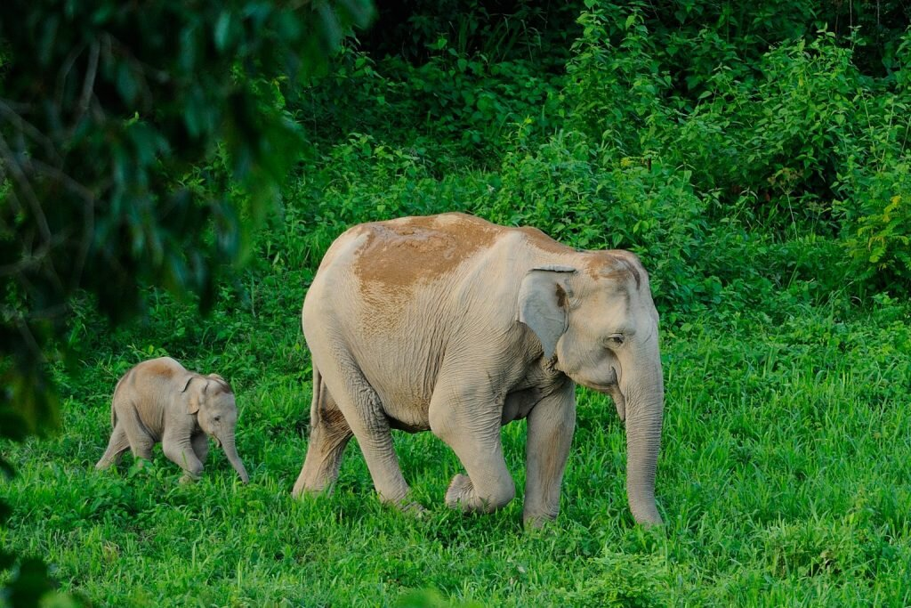 The best wildlife sanctuaries allow elephants to be elephants. Image by  tontantravel  /  Flickr