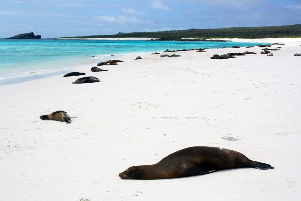 The Galapagos Islands host the best kind of animal show © Sarah Reid
