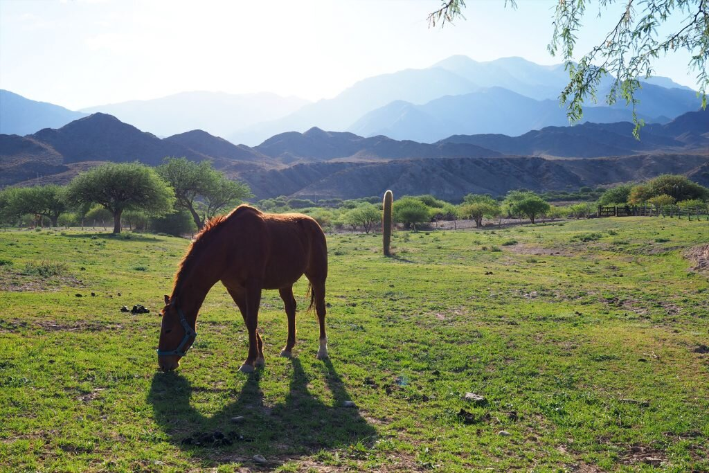 100 pesos says this horse in Salta Province is happier than Argentina's rodeo ponies © Sarah Reid
