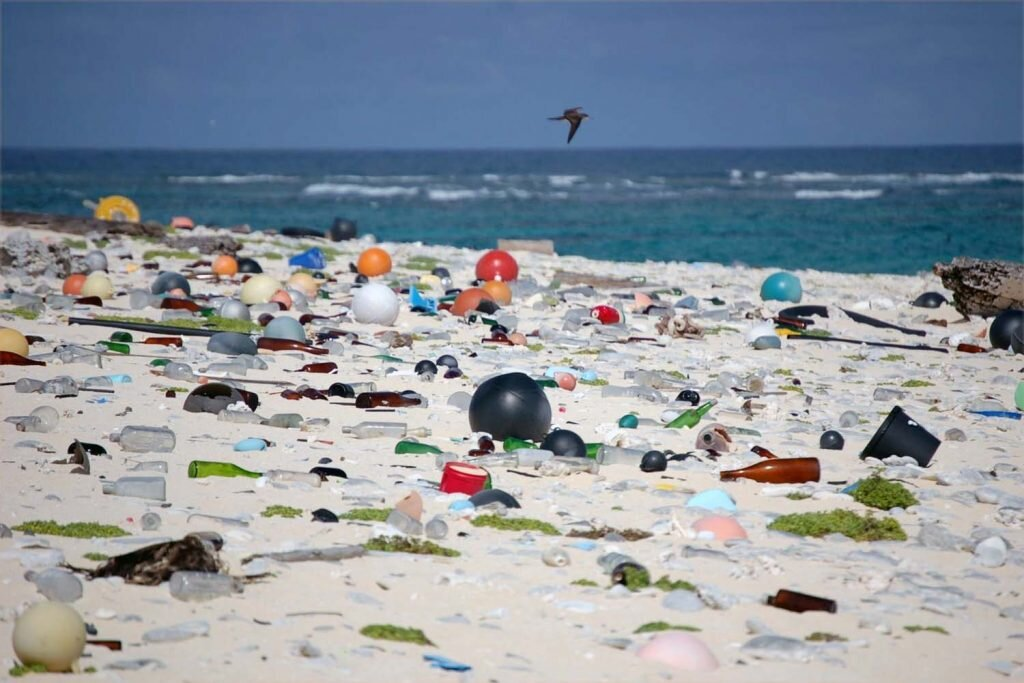 Seabirds mistake plastics for food, which can be fatal. Image by Susan White for USFWS /  Flickr  CC BY 2.0