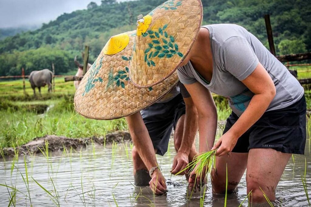 Travellers learn the 13 steps of rice farming on an excursion to the Living Rice Farm. Image by  ElCapitan  /  flickr