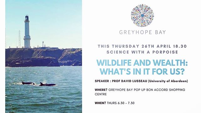 #Aberdeen #dolphins #sciencewithaporpoise #marinescience #cafenights #bonaccordcentre #popup #Torry #MakingItHappen #wildlife #wealth #universalbasicincome