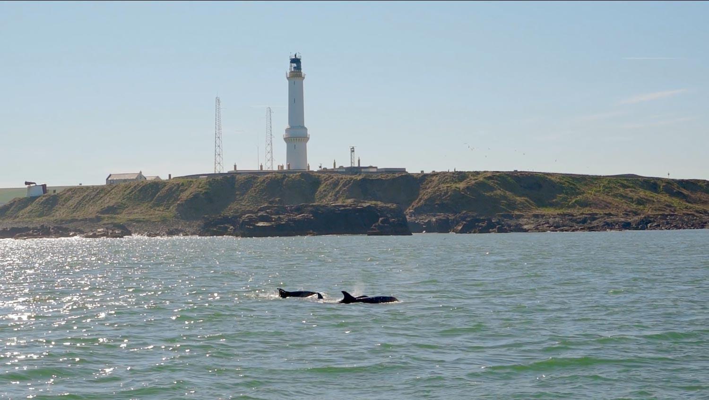Dolphins-GHB.jpg