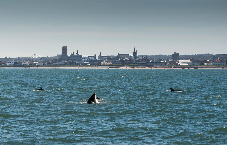 Dolphins on Aberdeen's beachfront