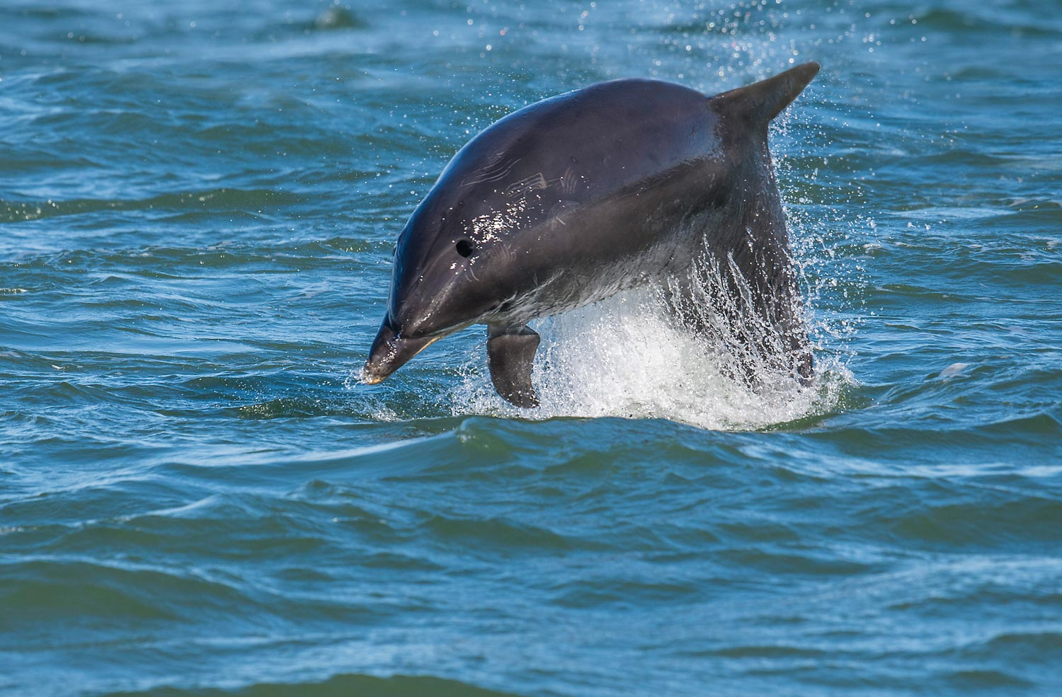 Watch our dolphins at play