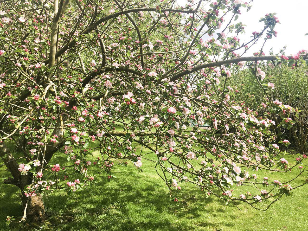 Blossom_pink.jpg