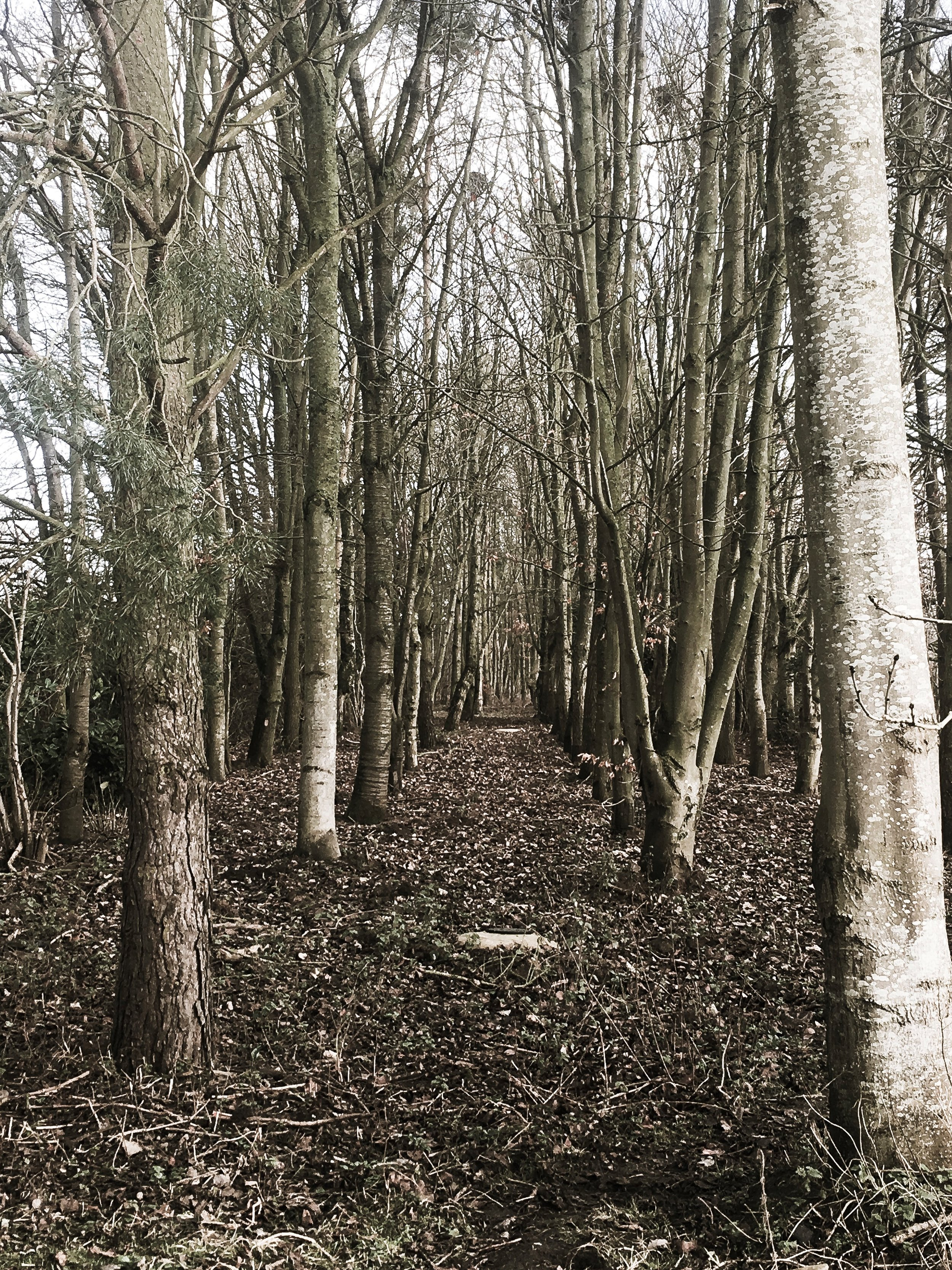 woods_moody.jpg