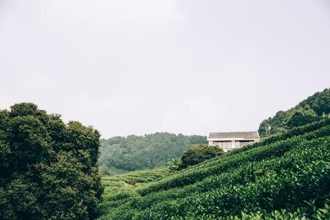 Coffeehills.jpg