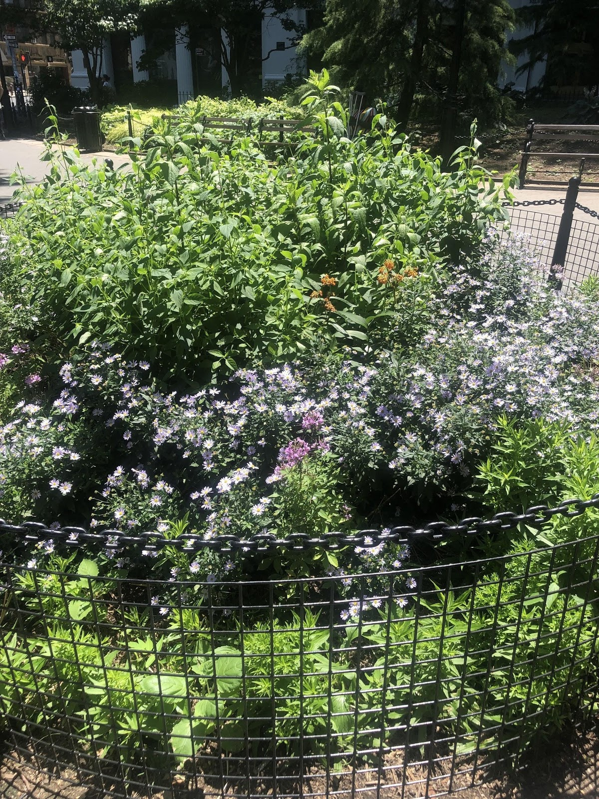A specific part of Washington Square Park designed to attract pollinating insects.