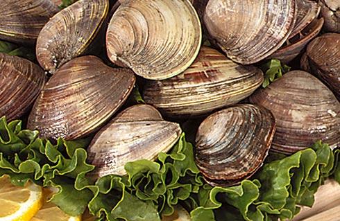 shellfish.jpg