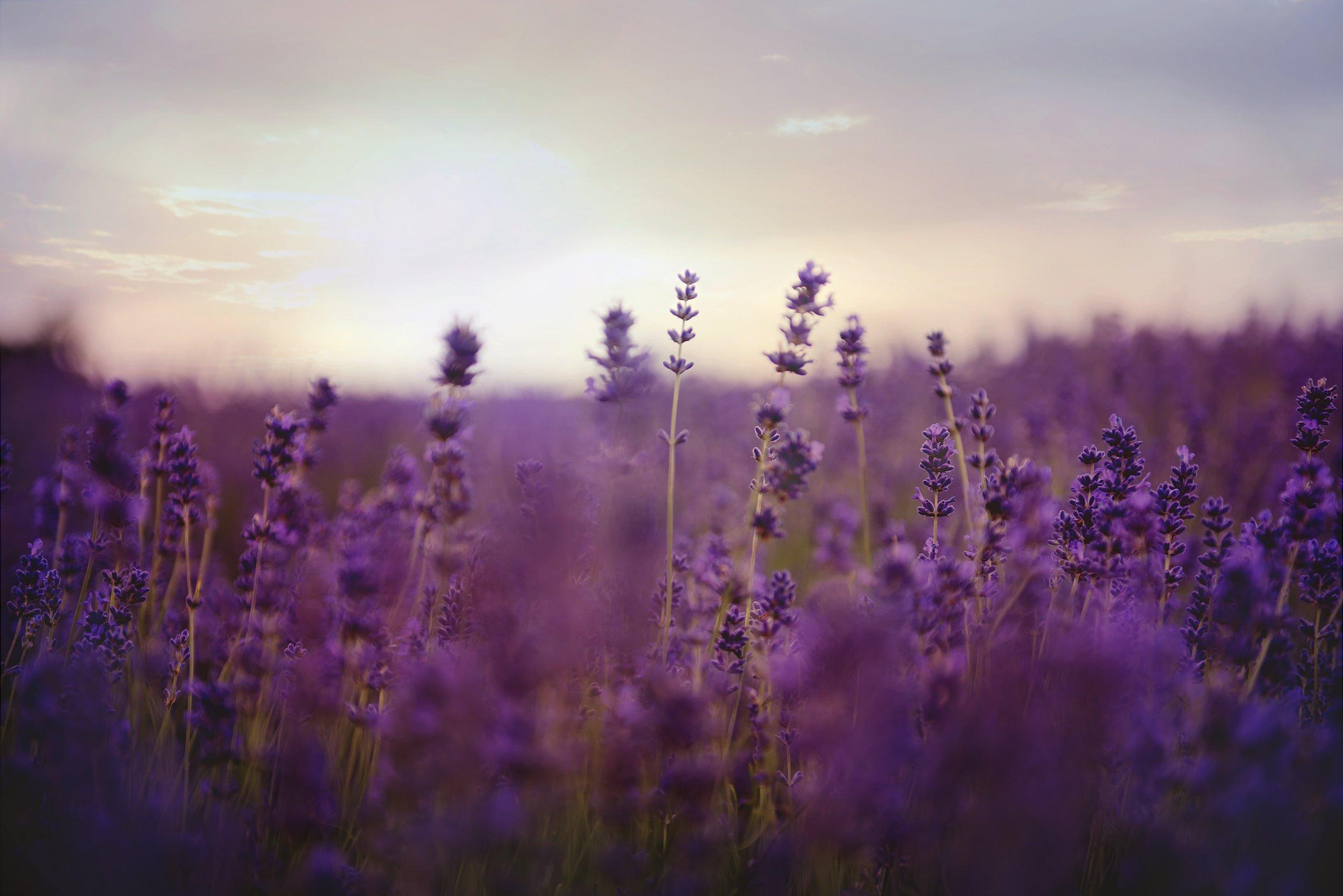 bloom-blossom-depth-of-field-1878095.jpg