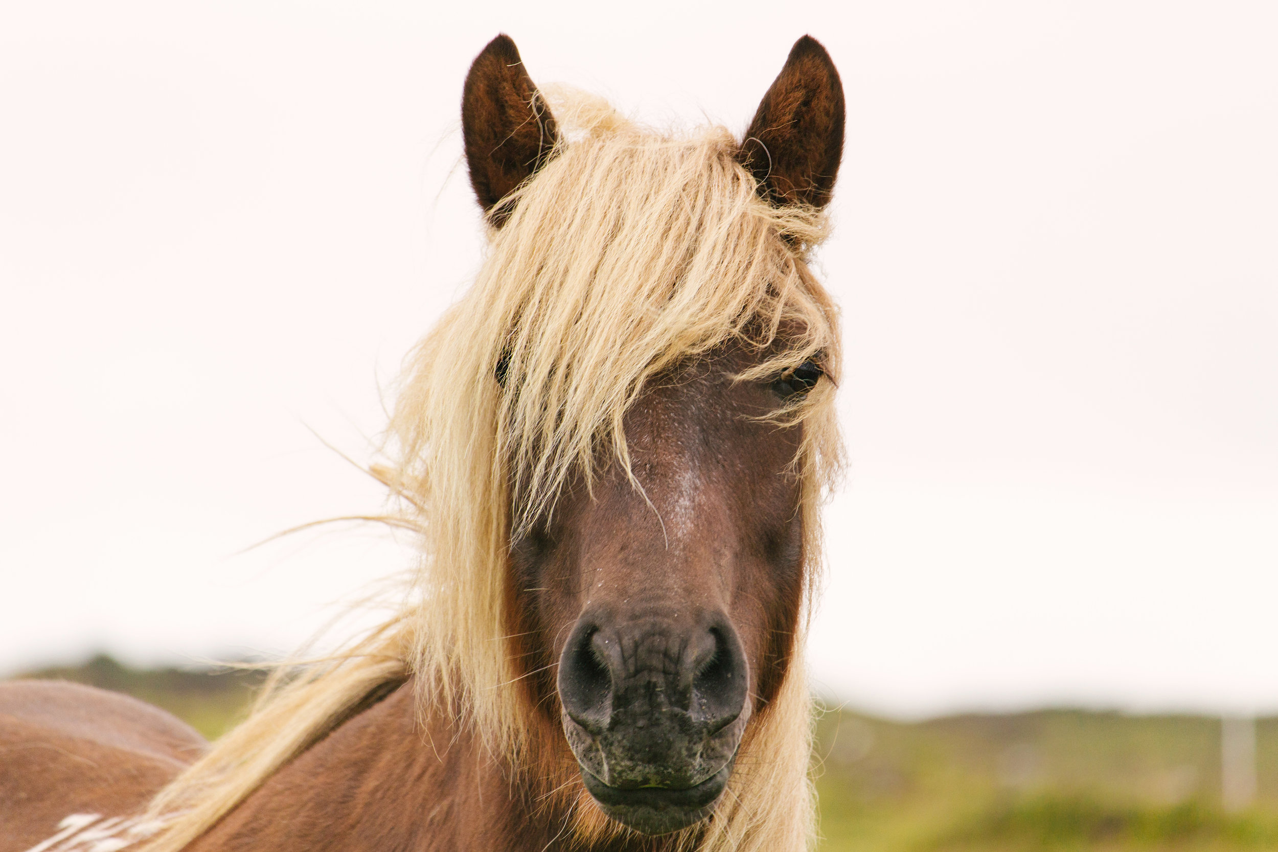 Animal Rehabilitation - Horses, and even other animals such as dogs, can benefit from the significant healing benefits of CranioSacral Therapy.