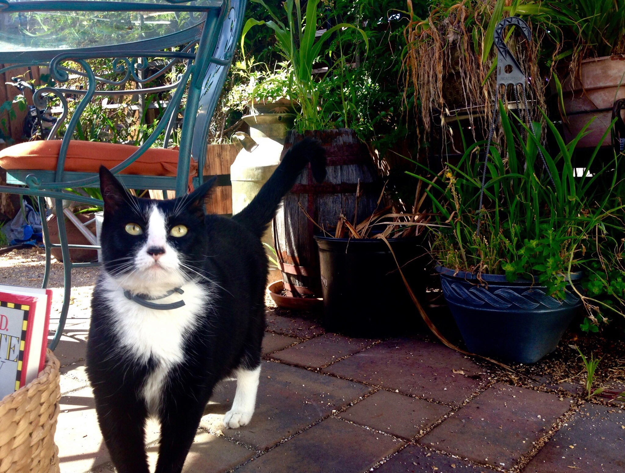 Tux - She loves to hang out in the studio with all the kids and be the center of attention.