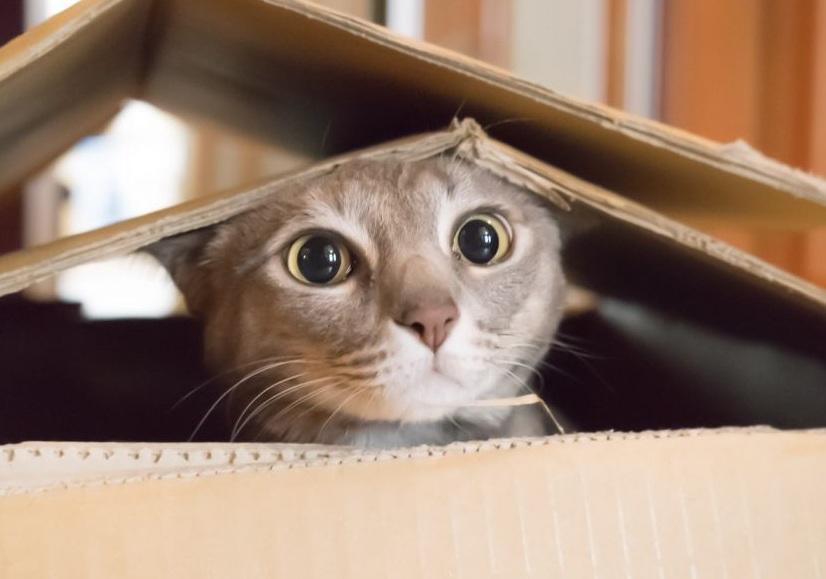 cat-playing-in-box-1050x700.jpg
