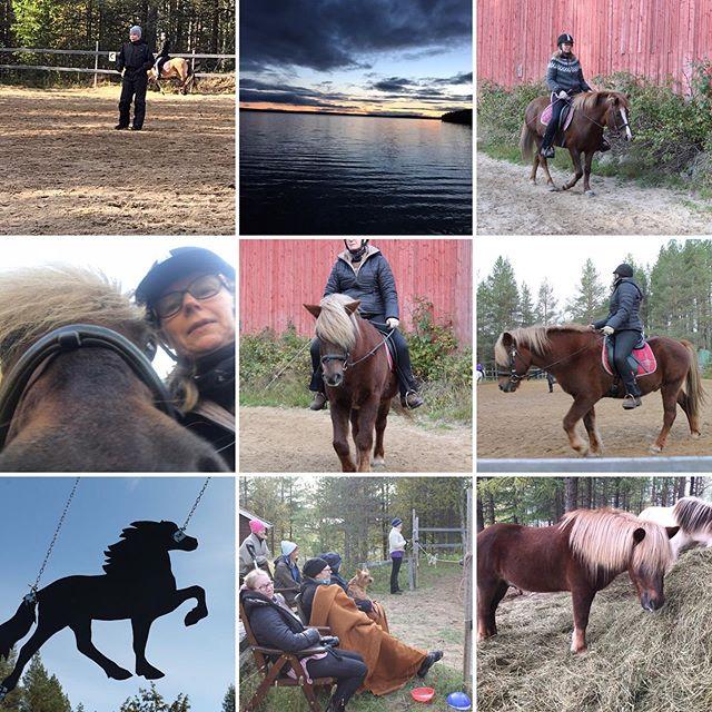 Mukava askellajiviikonloppu takana🐎#issikka #ishäst#askellaji#istuntakuntoon #hauskaaoli🐎🐎💕💕
