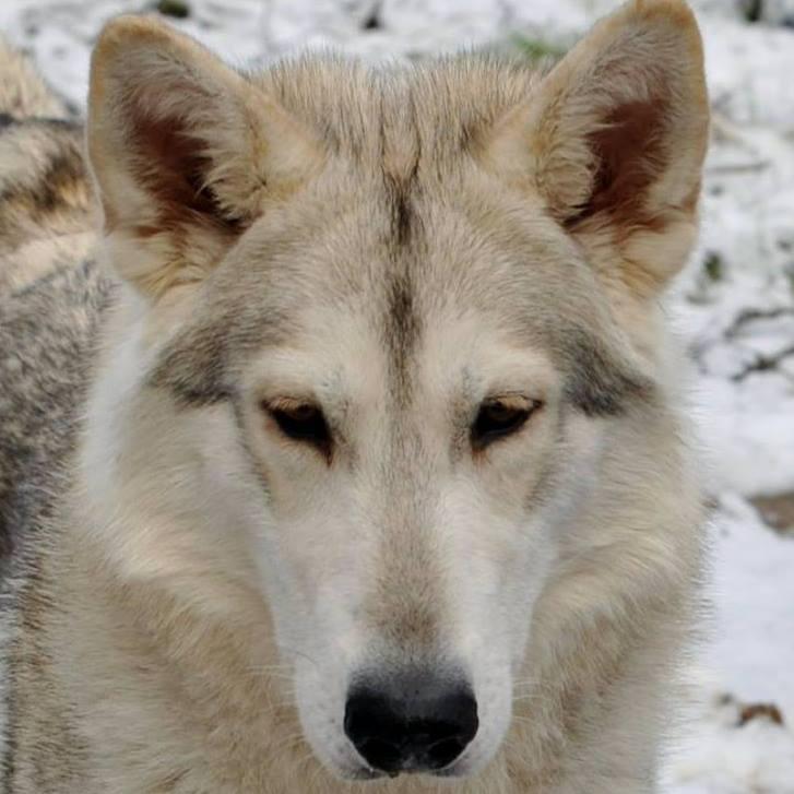 luna in the snow.jpg