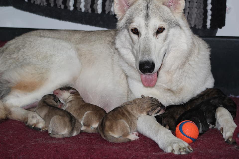 luna and babies.jpg