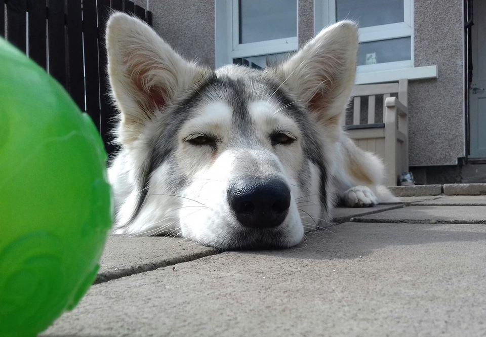sleepy sia.jpg