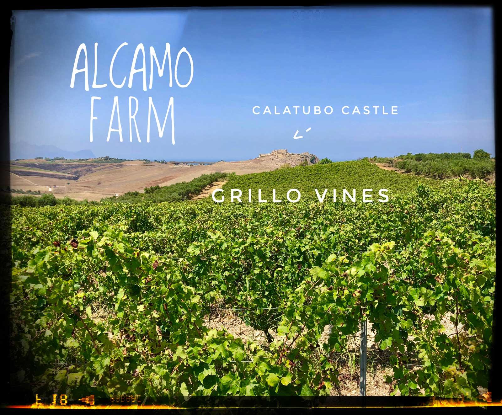 alcamo_farm_crop.jpg