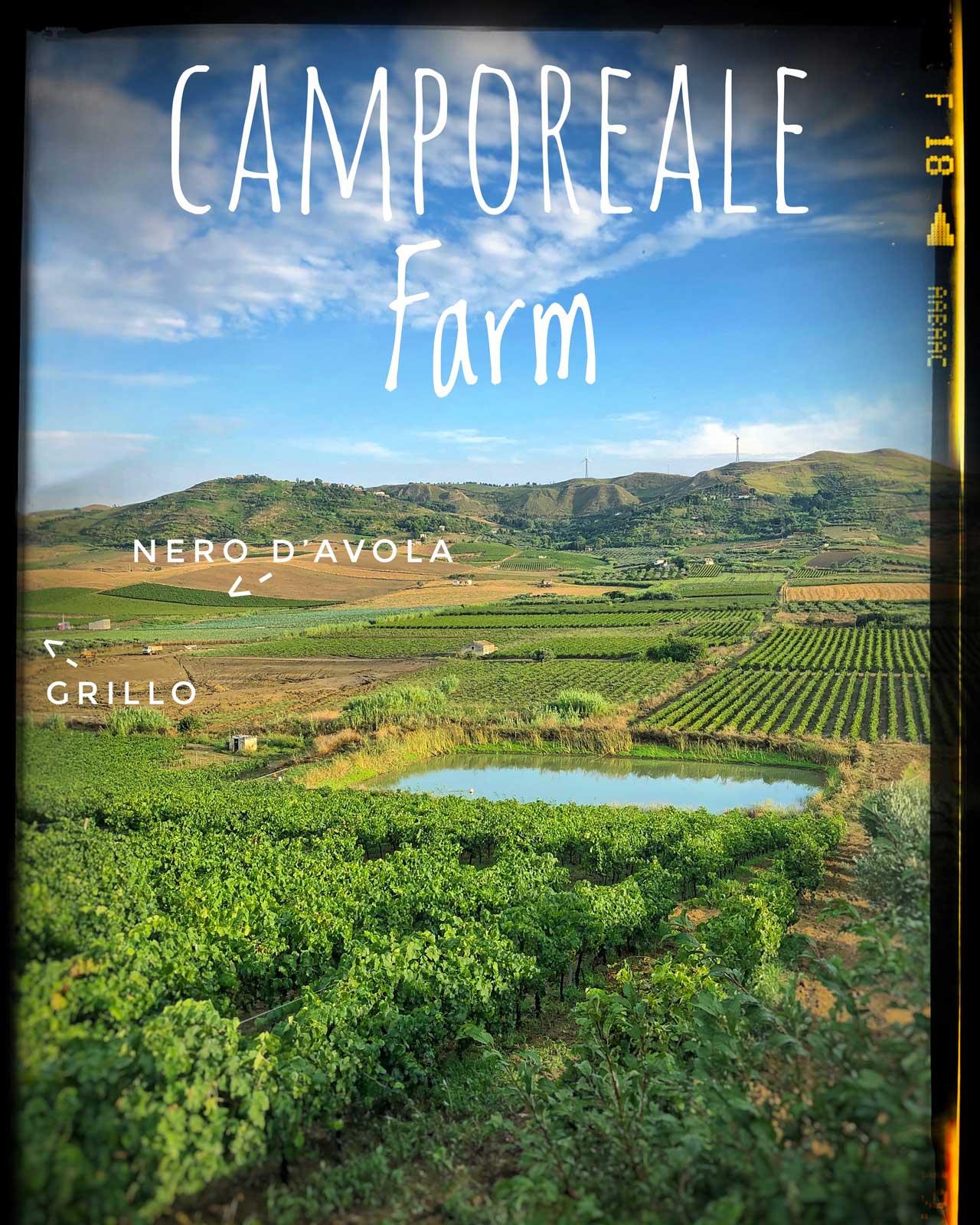 camporeale_farm_crop.jpg