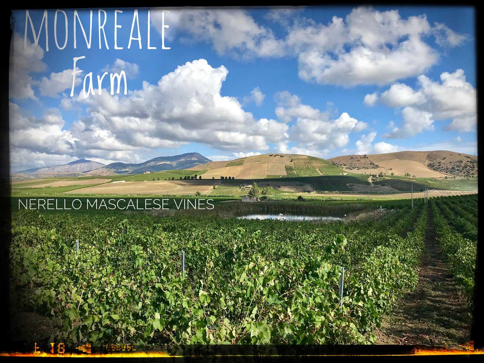 monreale_farm_crop.jpg