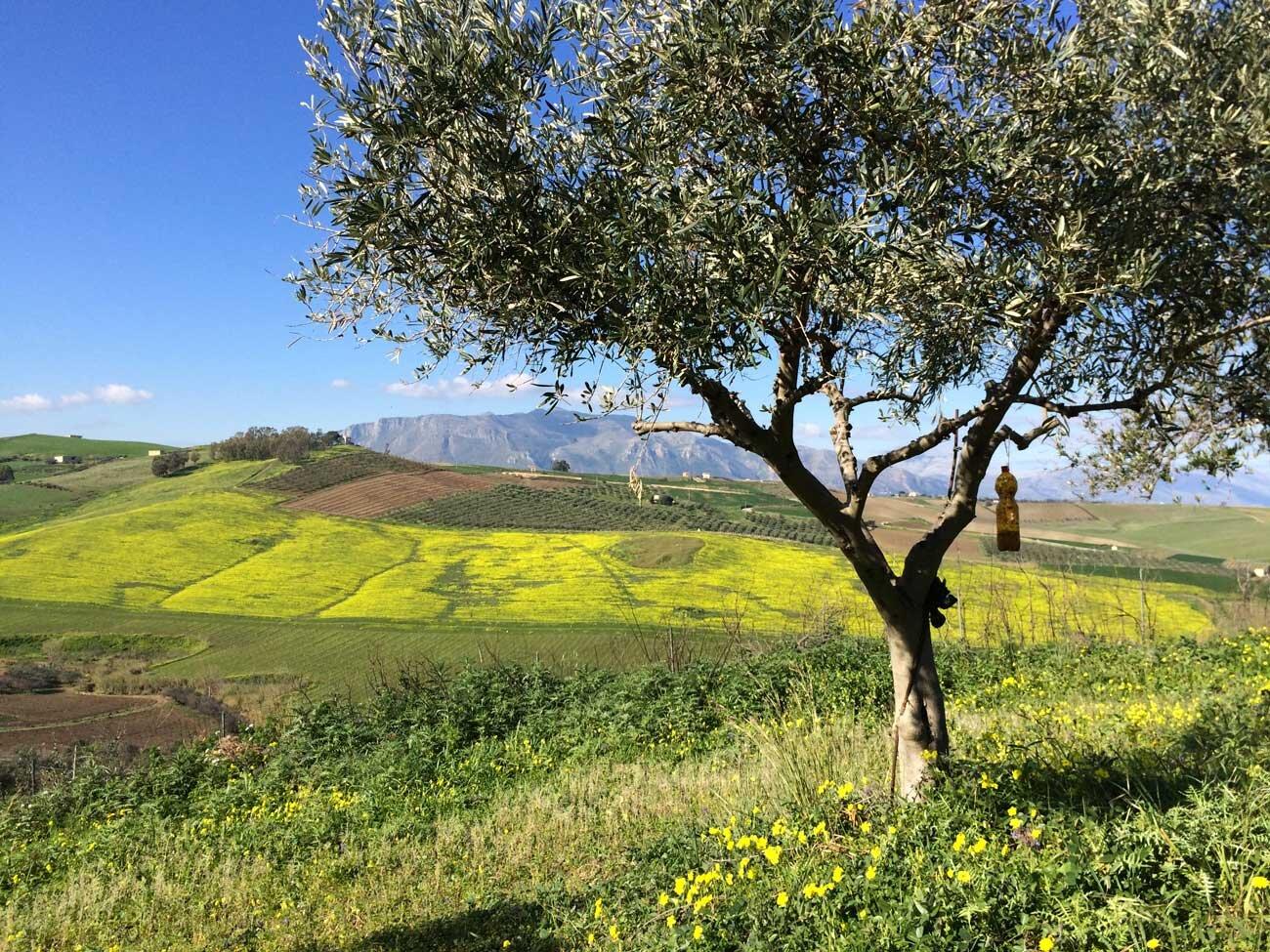 Snapseed_crop.jpg