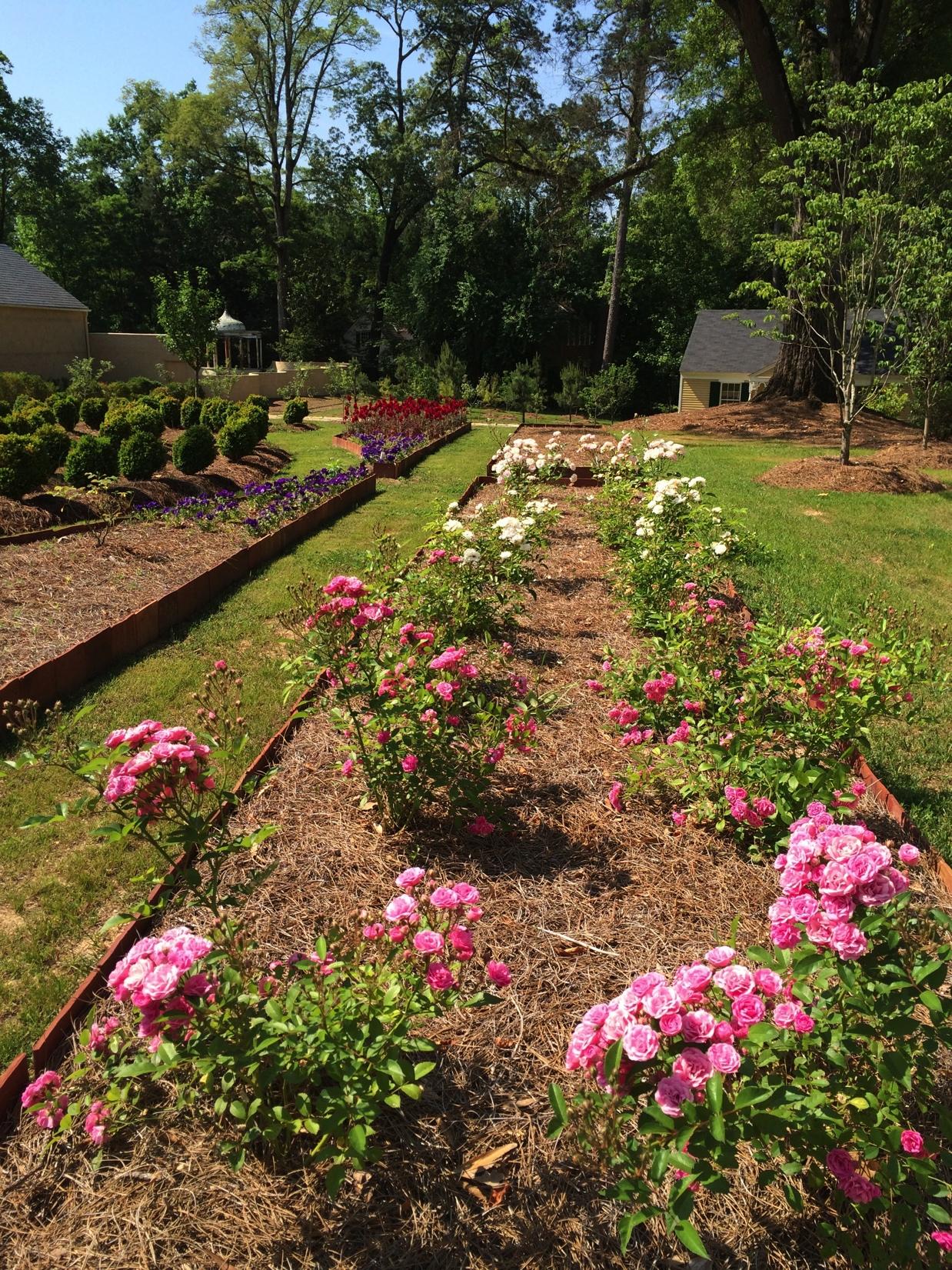 Mono Garden Roses.jpg