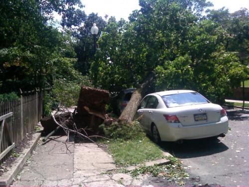 tree-on-car-hurr-irene-dc.jpg