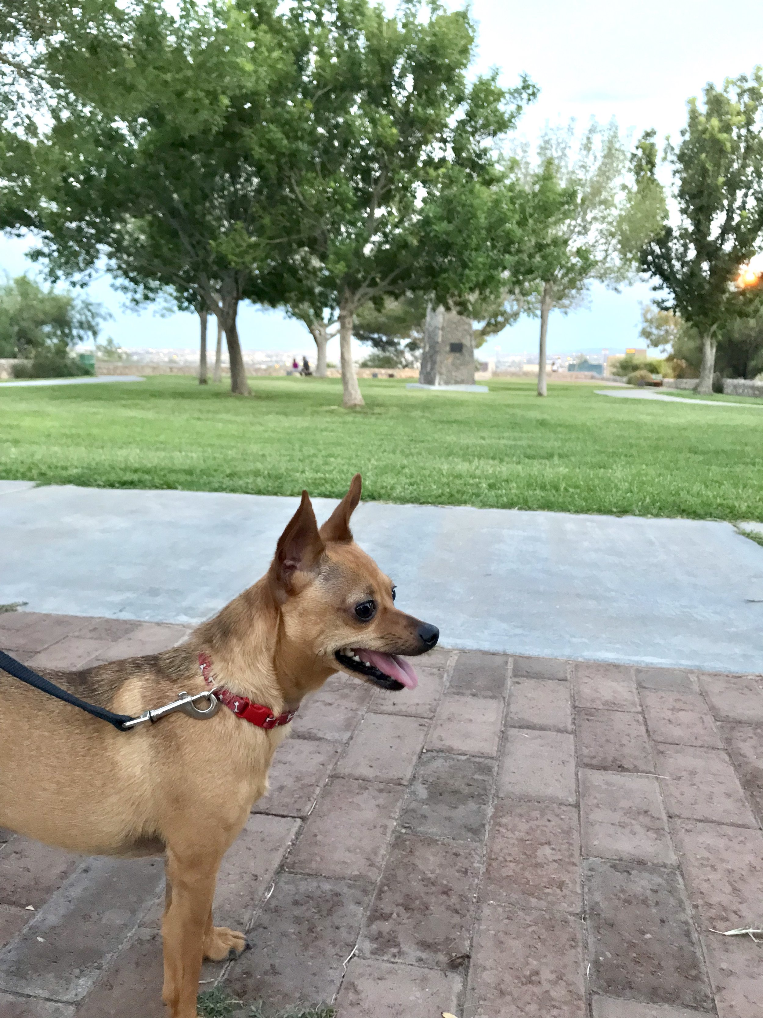 Our little chihuahua, Gracie, loves sniffing around and walking to this park.