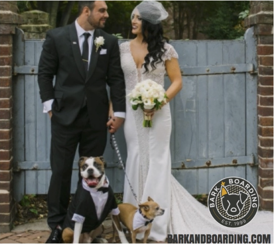 Dog+Wedding+Attendant.png