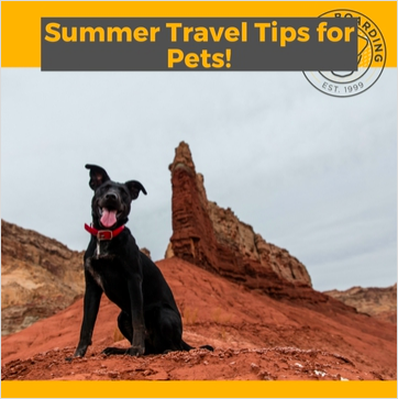 Summer-Travel-Tips-for-Pets.png