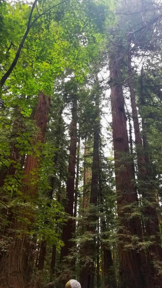 RedwoodsWorkWithMeBanner.JPG