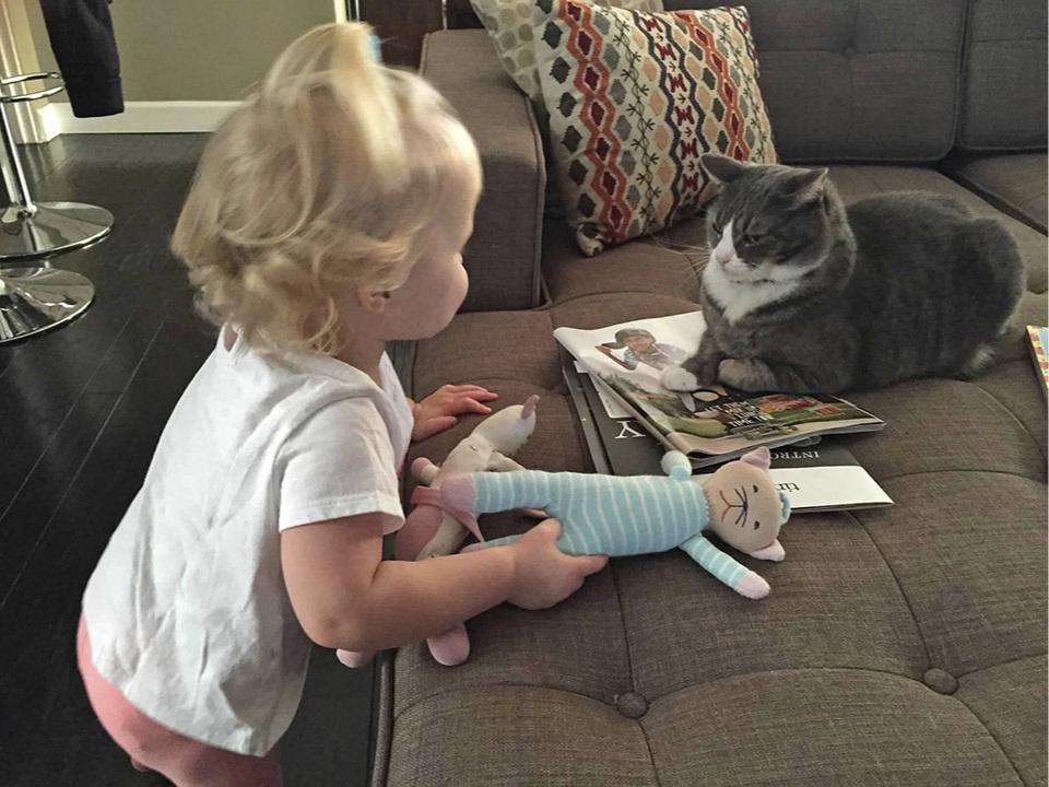 Meow Meow Versus Cat