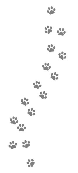 Paws.jpg