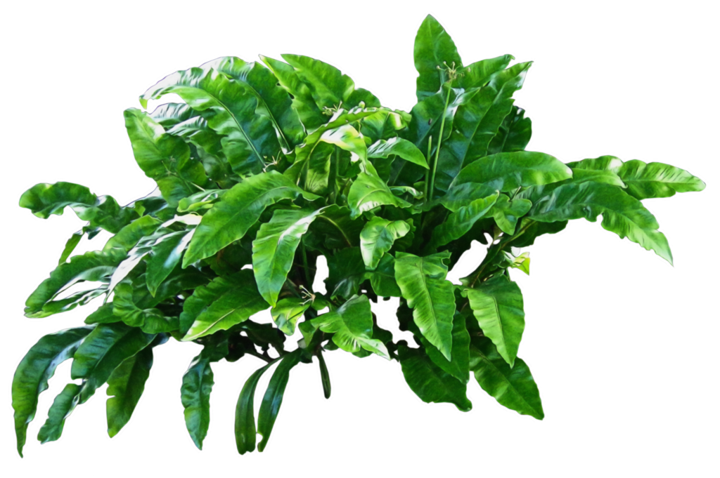 Plants-PNG-Picture.png