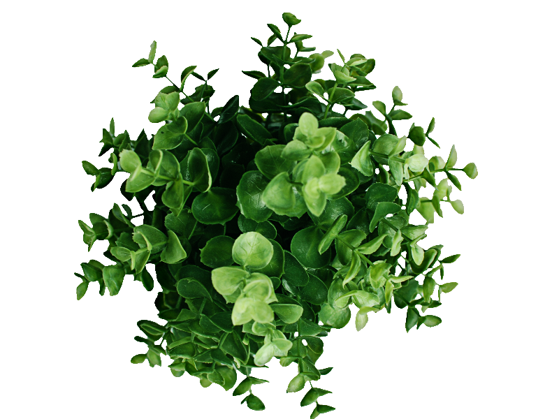 plant-top-view-PNG-image-thumb24.png