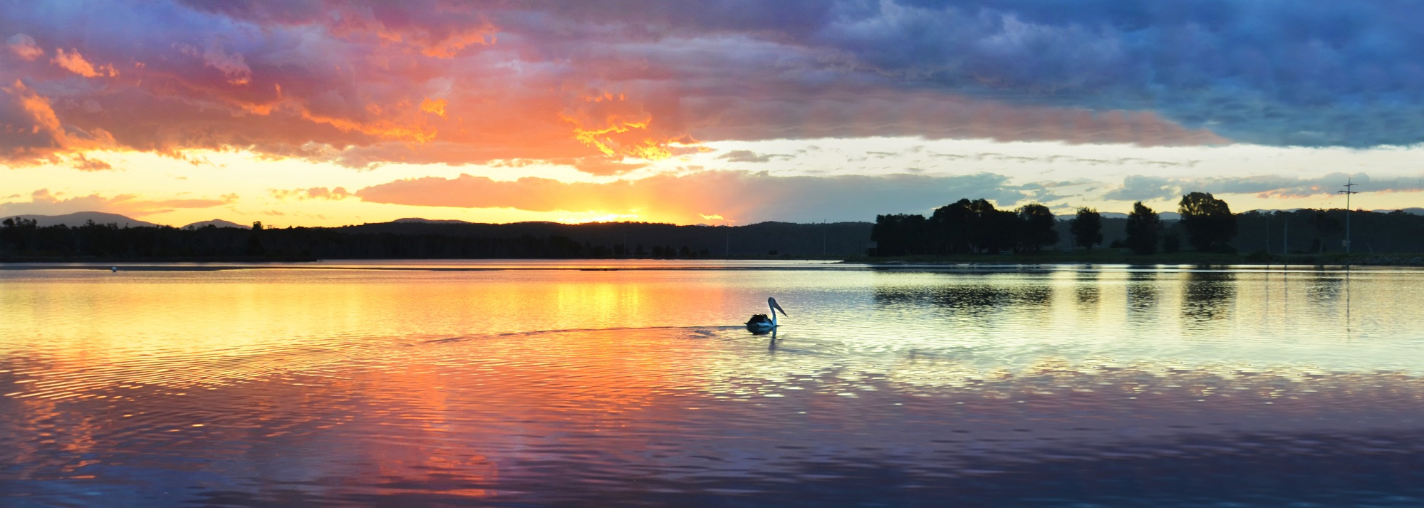 B&S - page banner lake & pelican.jpg
