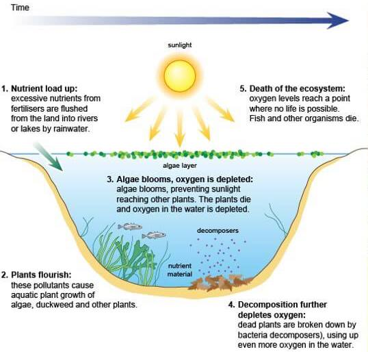 Phosphates cause eutrophication and a dead zone
