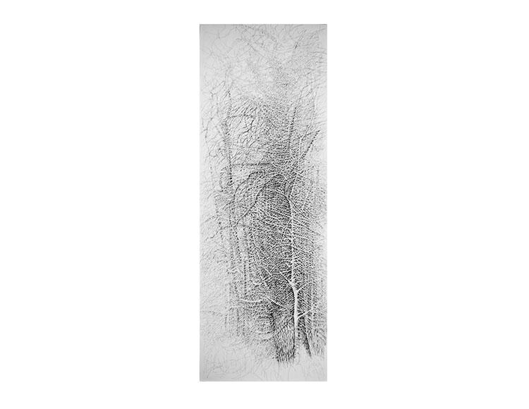 Taillis sous futaie de vieux chênes