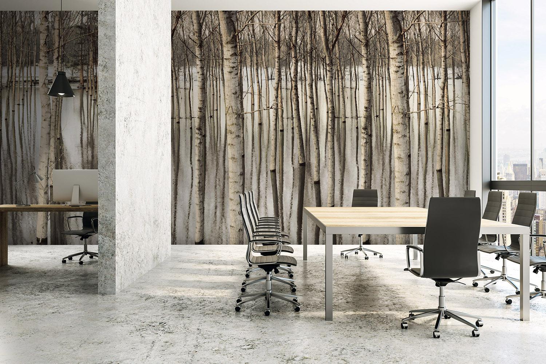 Gravity Digital Walls - Birch Trees - Afternoon Glow