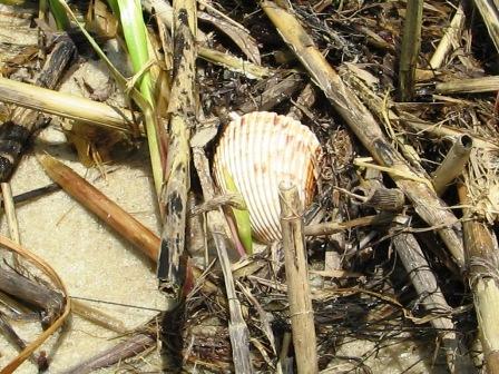 clamshell.jpg