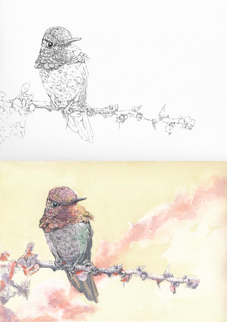 anna_hummingbird_work.jpg
