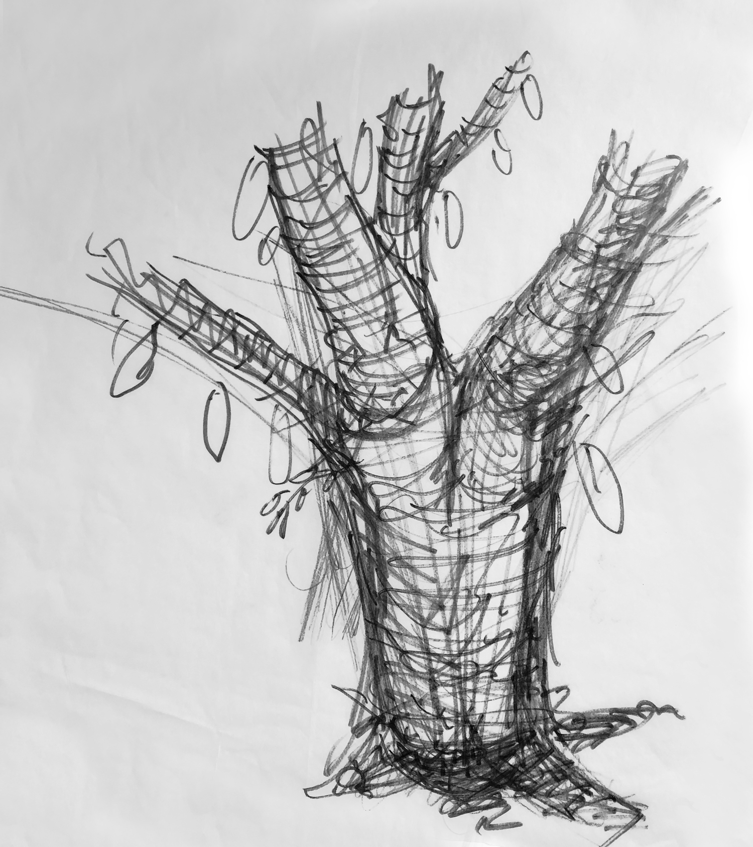 tree_2_web.jpg