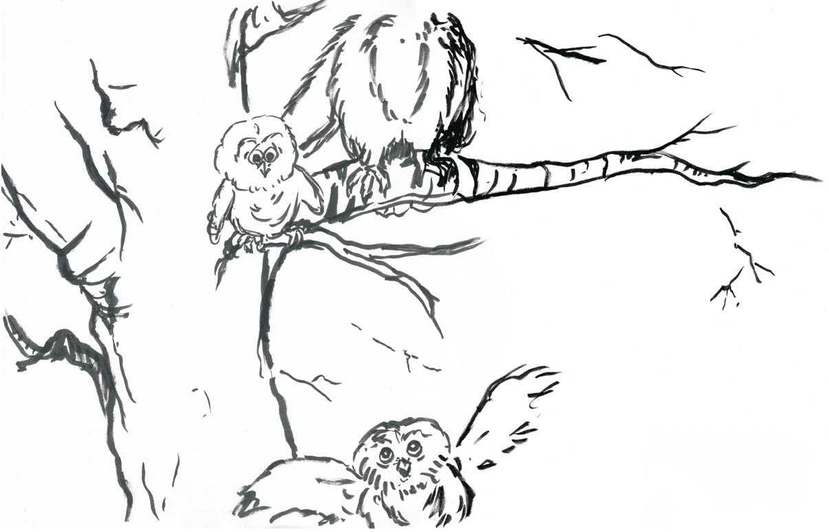 owl_school_ink.jpg