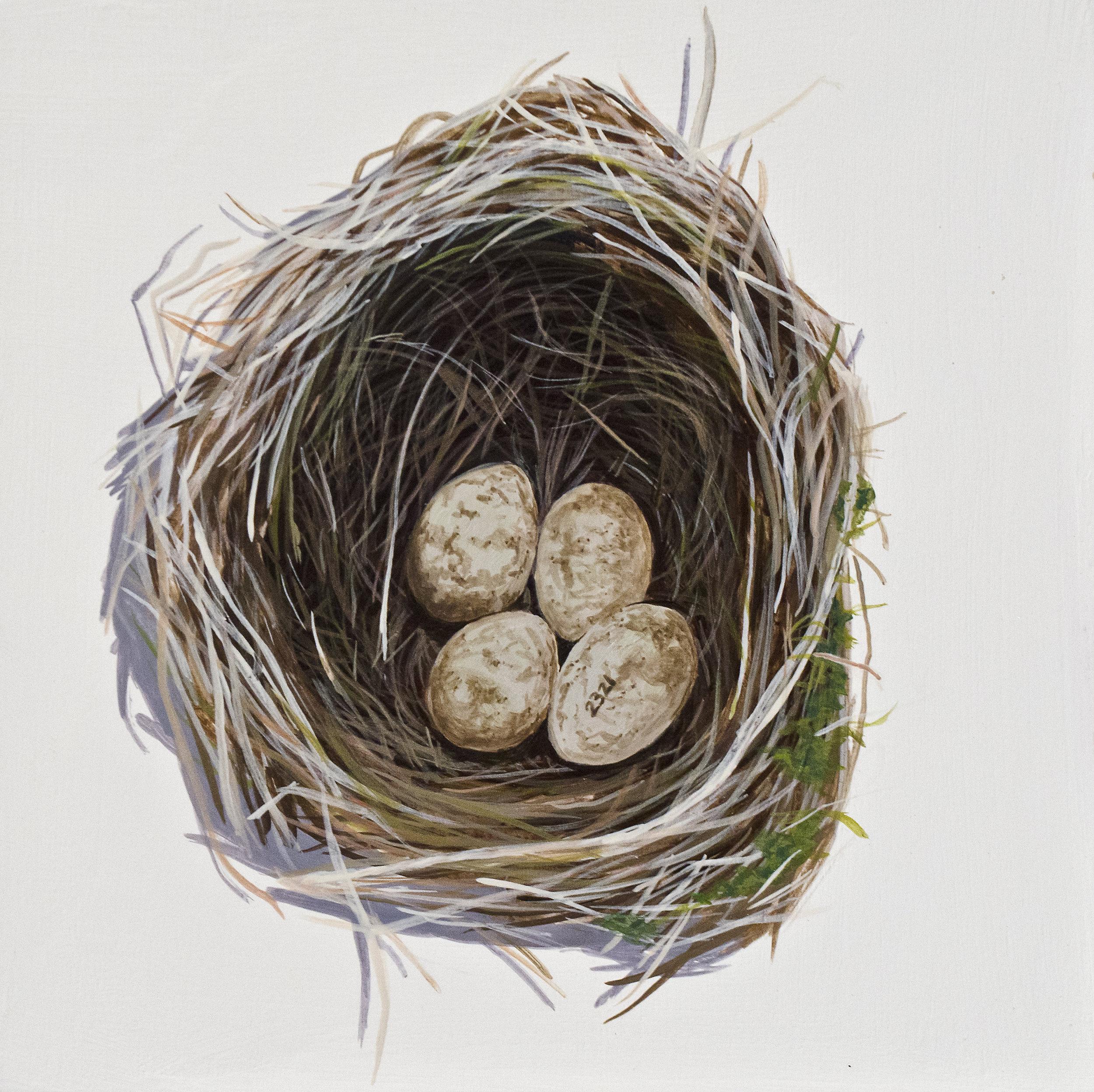 Reed Warbler Nest