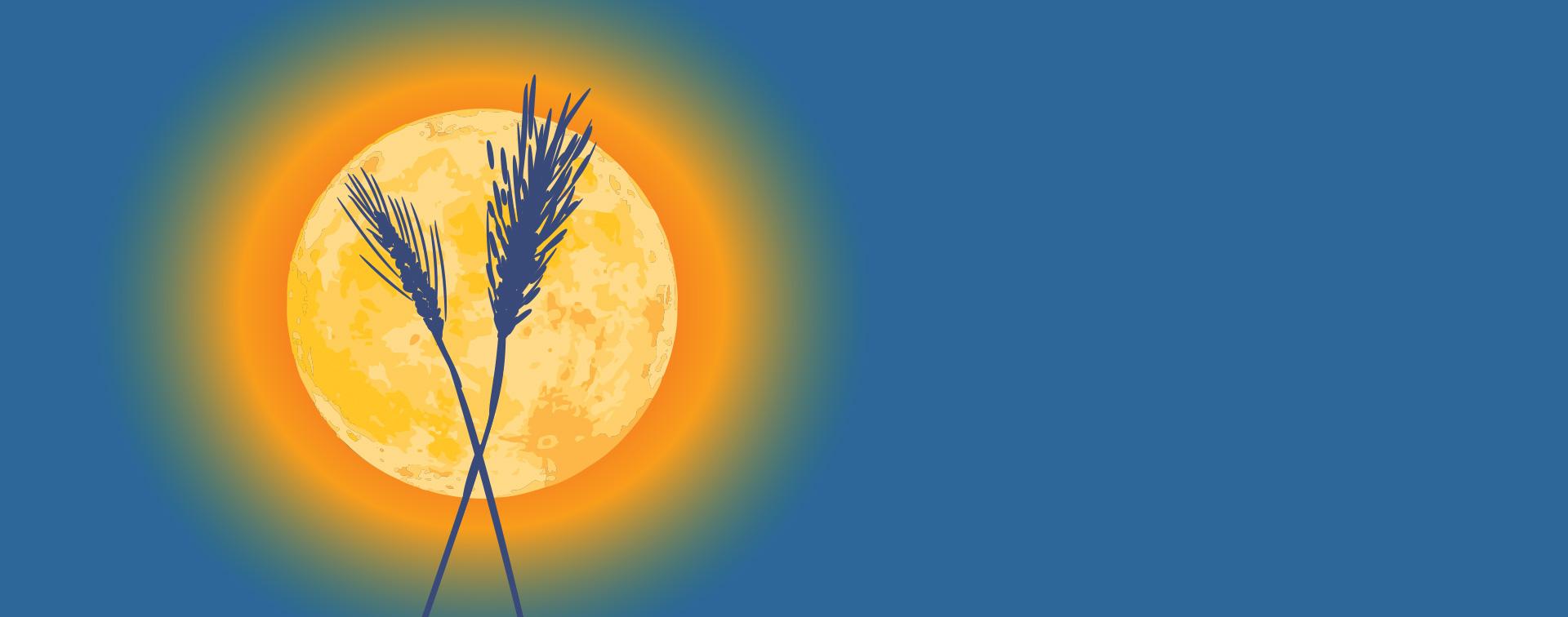 Harvest Moon Shed