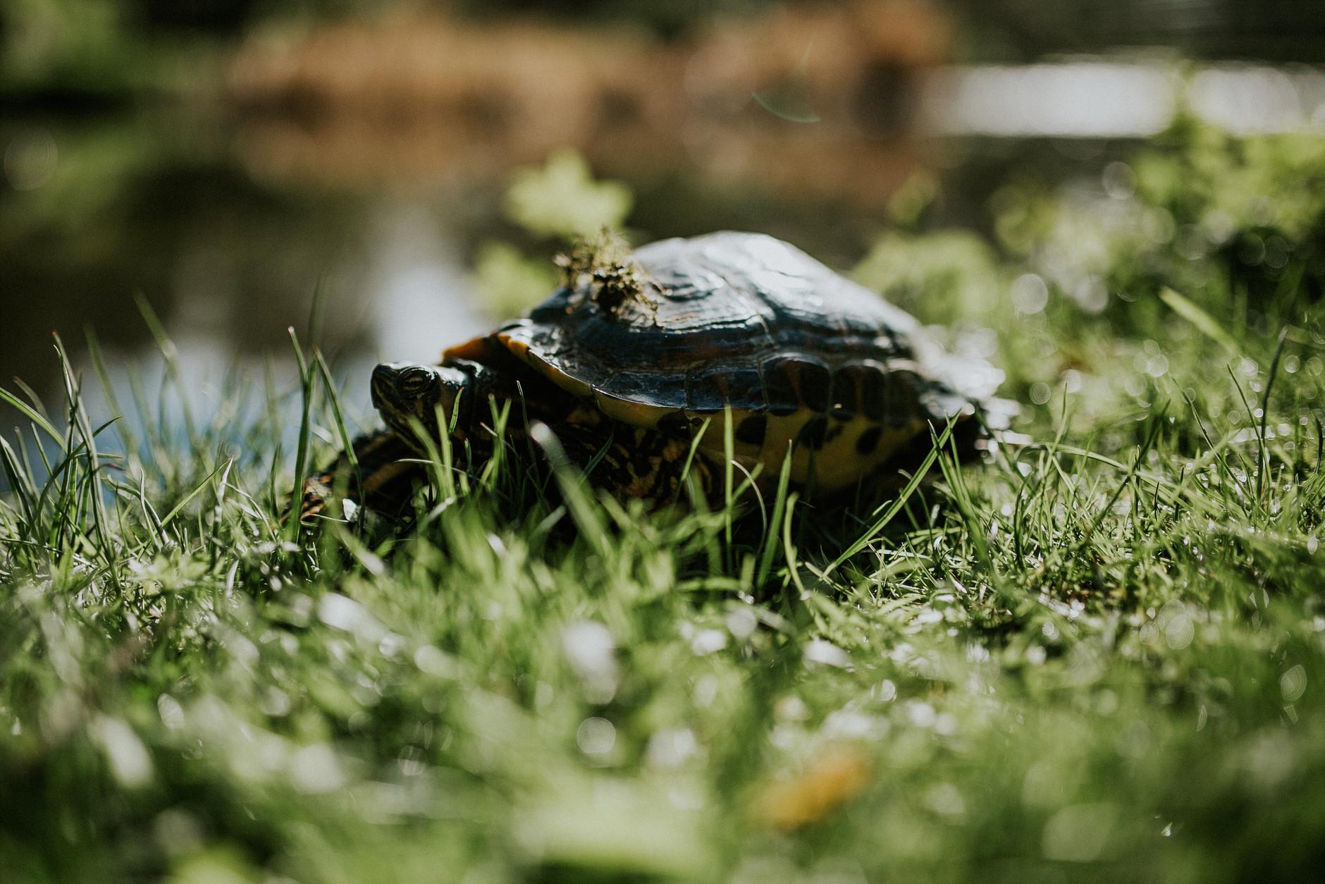 spring-botanical-gardens-dublin-photography-0002.jpg