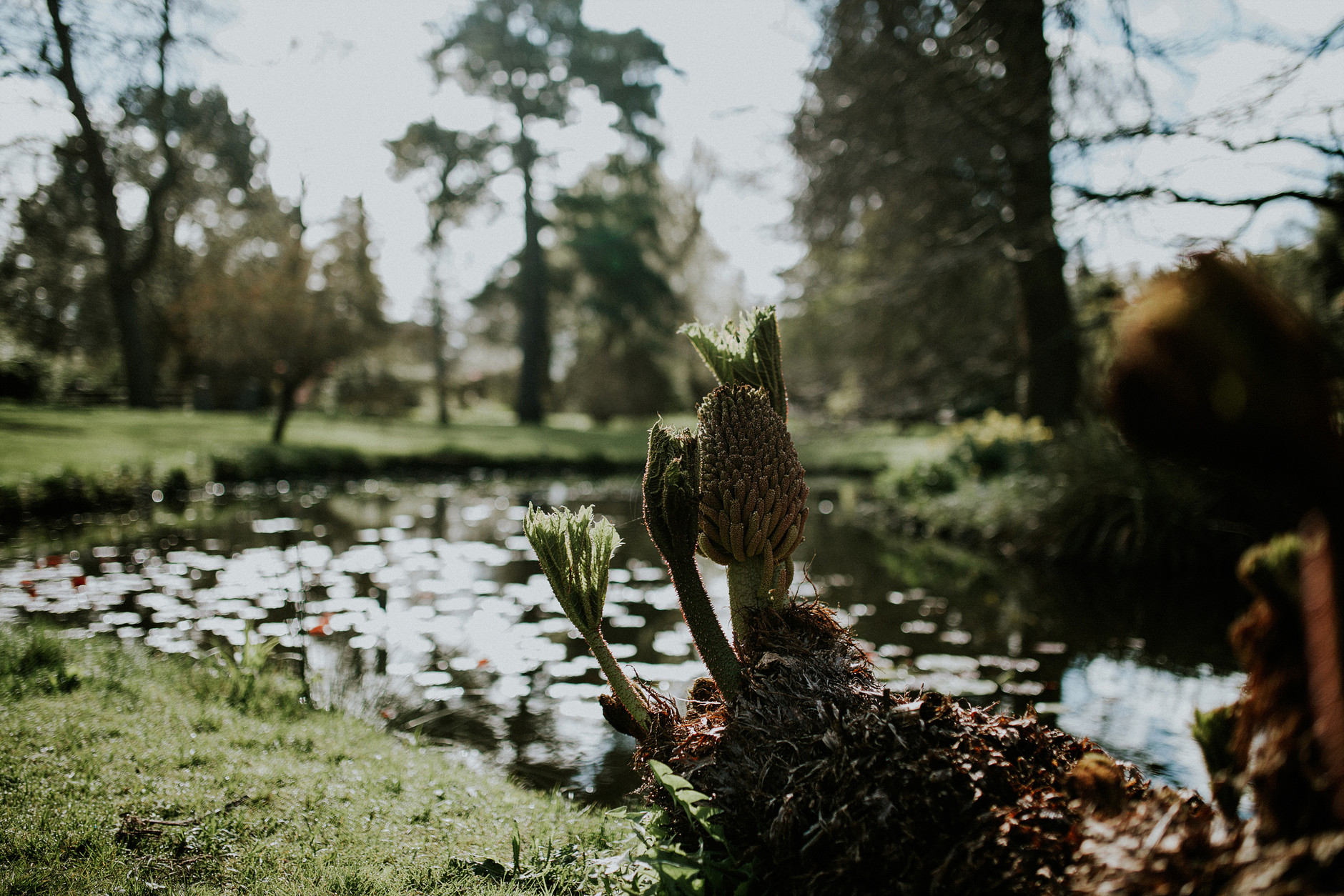 spring-botanical-gardens-dublin-photography-0007.jpg